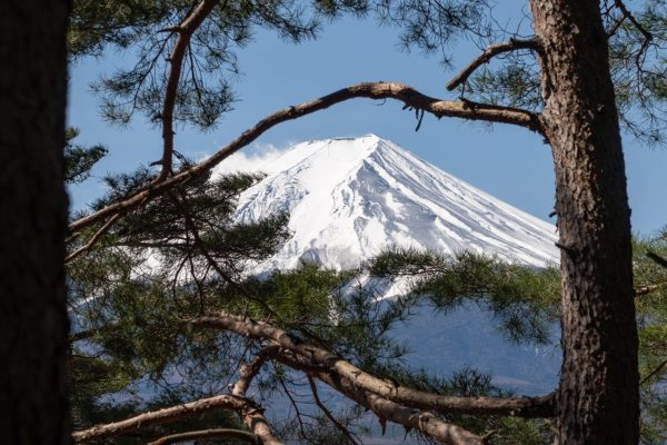 mount Fuji with tree at daytime